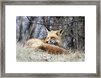 Watchful Gaze Framed Print