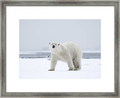 Watchful In The Arctic Framed Print