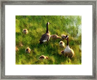 Watchful Parents - Impressionist Canada Geese Wildlife Painting Framed Print by Rayanda Arts
