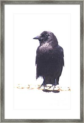 Framed Print featuring the photograph Watching And Waiting by Terri Thompson