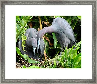Watching The Hatching Framed Print