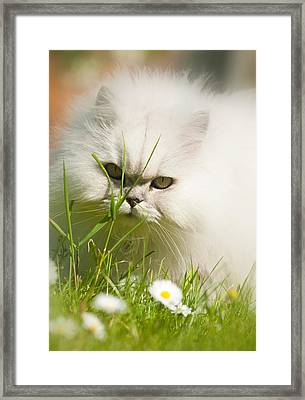 Watching Daisies Framed Print