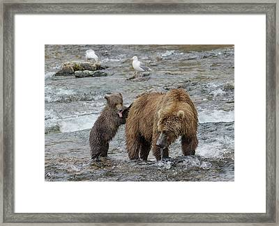 Framed Print featuring the photograph Watching For The Sockeye Salmon by Cheryl Strahl