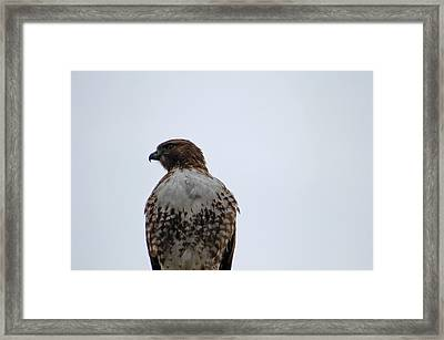 Watching From Above Framed Print by Jean Booth