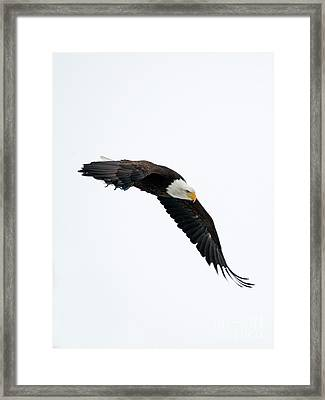 Watching From Above Framed Print by Mike Dawson
