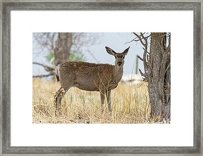 Watching From The Woods Framed Print by James BO Insogna