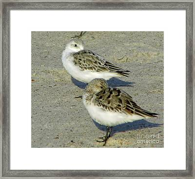 Watching Me Framed Print by D Hackett