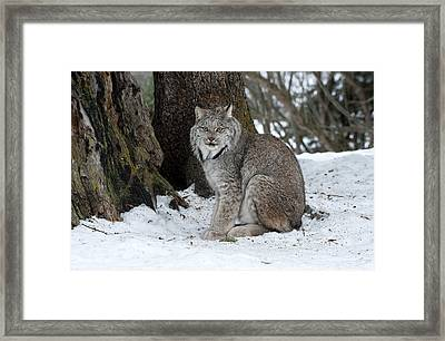 Watching Me Watch You Framed Print by Sandra Bronstein