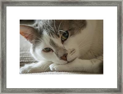 Watching Me, Watching You Framed Print