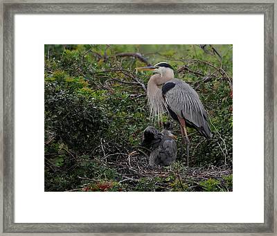 Watching Mother Framed Print by Keith Lovejoy