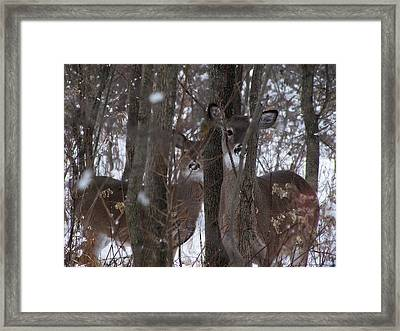 Watching Nature Watching Me Framed Print
