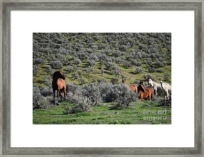 Watching Over His Herd Framed Print by LKB Art and Photography