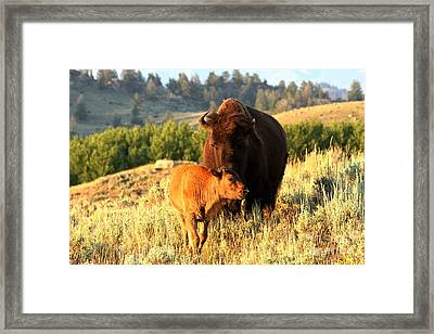 Watching Over Junior Framed Print