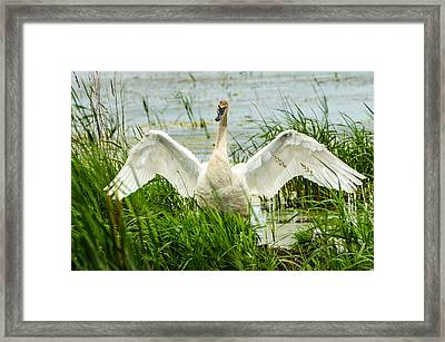 Framed Print featuring the photograph Watching Over by Steven Santamour