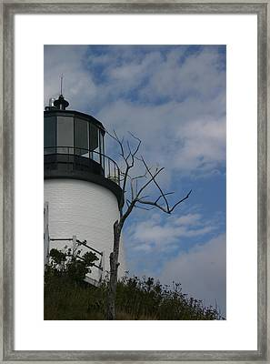 Watching Over Tree Framed Print by Dennis Curry