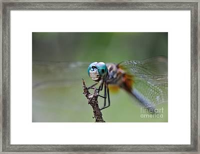Watching Over Framed Print by Wayne Nielsen