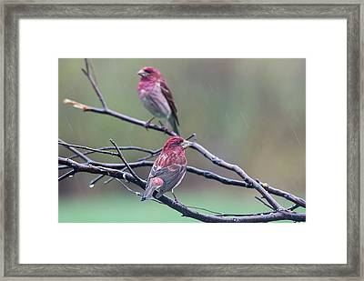 Framed Print featuring the photograph Watching Over You by Susan Capuano