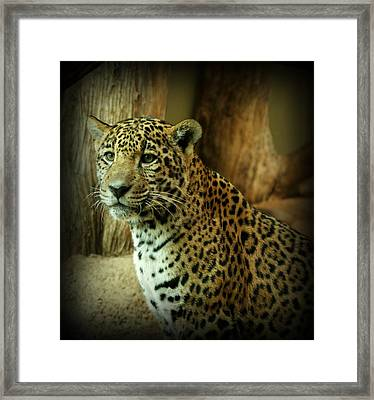 Watching Framed Print by Sandy Keeton