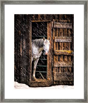 Watching The Snow Fall Framed Print by Bob Orsillo