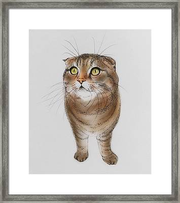 Watching The Snow Falling Framed Print by Pookie Pet Portraits