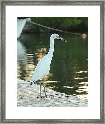 Watching The Sunset Framed Print by Maria Suhr