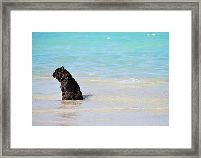 Framed Print featuring the photograph Watching The Waves by Amee Cave