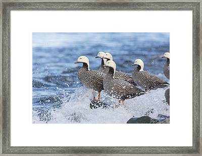 Watching The Waves Roll In Framed Print