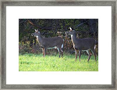Watching You Framed Print by Alan Dean