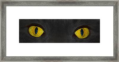 Watching You Framed Print by Shane Bechler