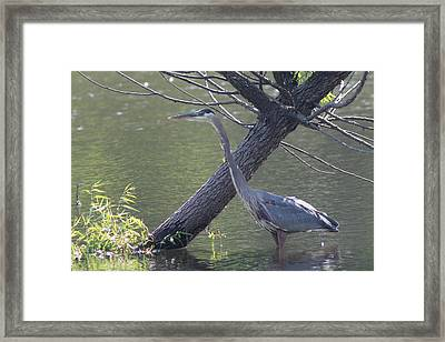 Water Bird And River Tree Framed Print