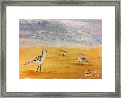 Water Birds Framed Print