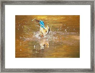 Water Birth Framed Print by Charl Roux