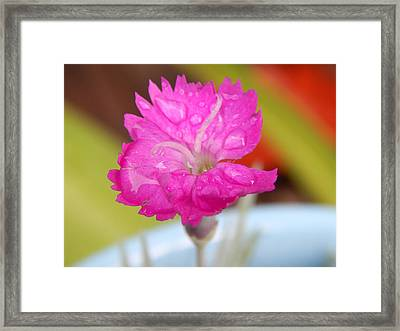 Water Bug Flower Framed Print by Samantha Thome