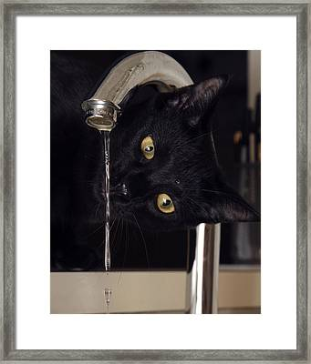 Water Bug Framed Print