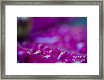 Water Color Framed Print by Sue OConnor