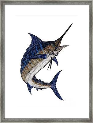 Water Color Tribal Marlin IIi Framed Print by Carol Lynne
