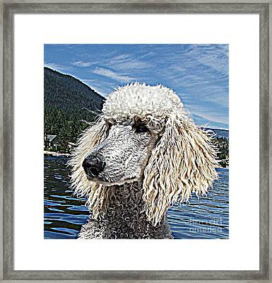 Water Dog Framed Print by Joey Nash