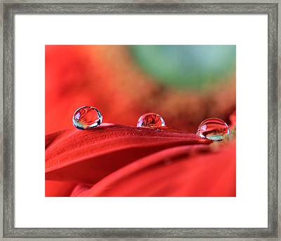 Water Drop Reflections Framed Print