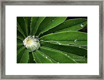 Water Drop Framed Print by Marta Grabska-Press