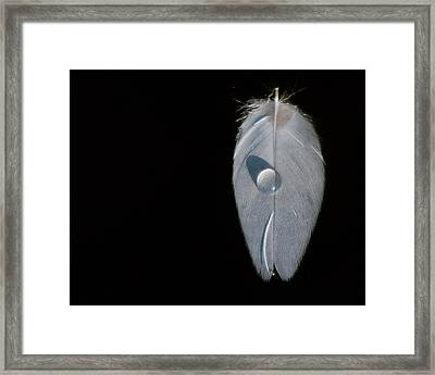 Water Drop On A Feather Boat Framed Print by Mark Preston