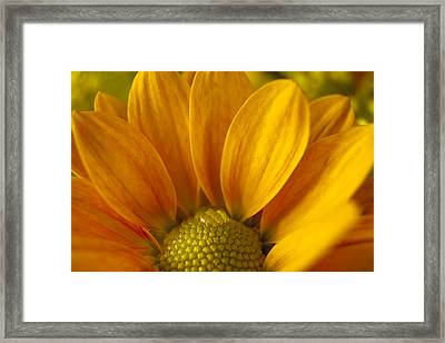 Water Drop On An Aster Framed Print