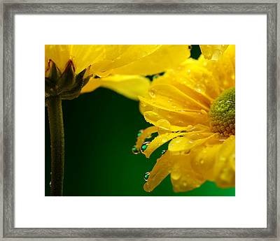 Water Drop Reflections I I Framed Print by Laura Mountainspring