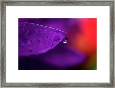 Water Drop Reflections With Purple II Framed Print