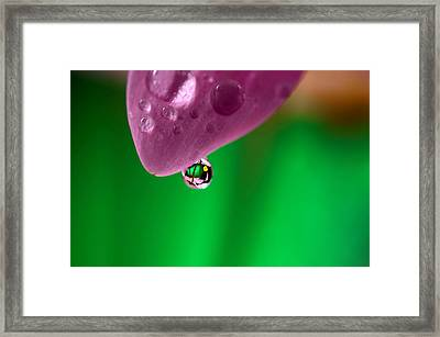 Water Drop Reflections With Purple Framed Print