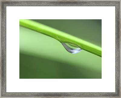 Framed Print featuring the photograph Water Droplet II by Richard Rizzo