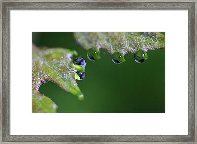 Framed Print featuring the photograph Water Droplet IIi by Richard Rizzo