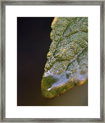 Framed Print featuring the photograph Water Droplet V by Richard Rizzo