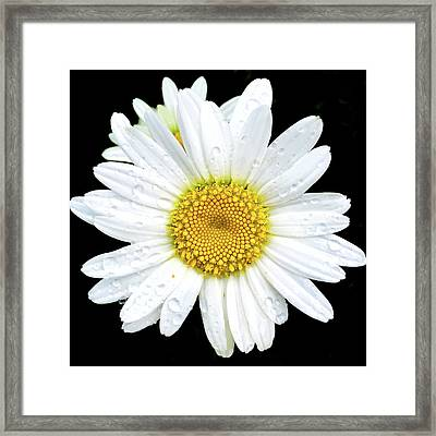 Water Droplets On Flower Framed Print by Andrew Soundarajan