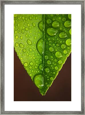 Water Droplets On Lemon Leaf Framed Print by PIXELS  XPOSED Ralph A Ledergerber Photography