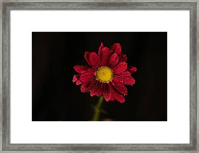 Framed Print featuring the photograph Water Drops On A Flower by Jeff Swan